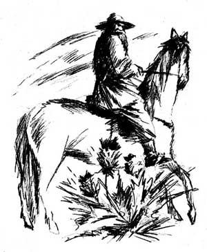 История куста. Рисунок художника Сергея САМСОНОВА
